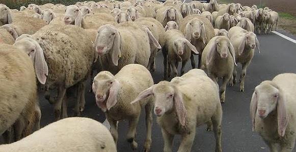 Santa Lucia del Mela, pastore muore scivolando in burrone
