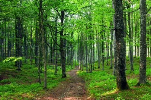 Respirare la foresta: alla scoperta dei benefici di olii essenziali