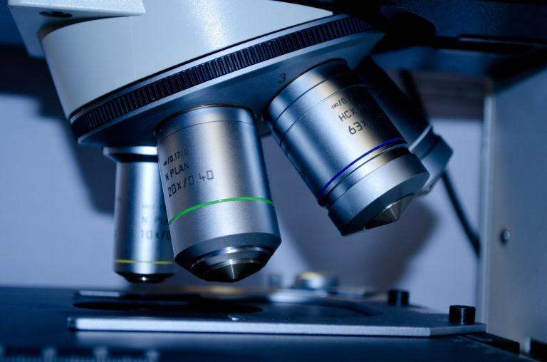 """Successi Unime: pubblicato su """"Scientific Reports"""" lo studio di una dottoranda sulle spugne antartiche e i microrganismi"""