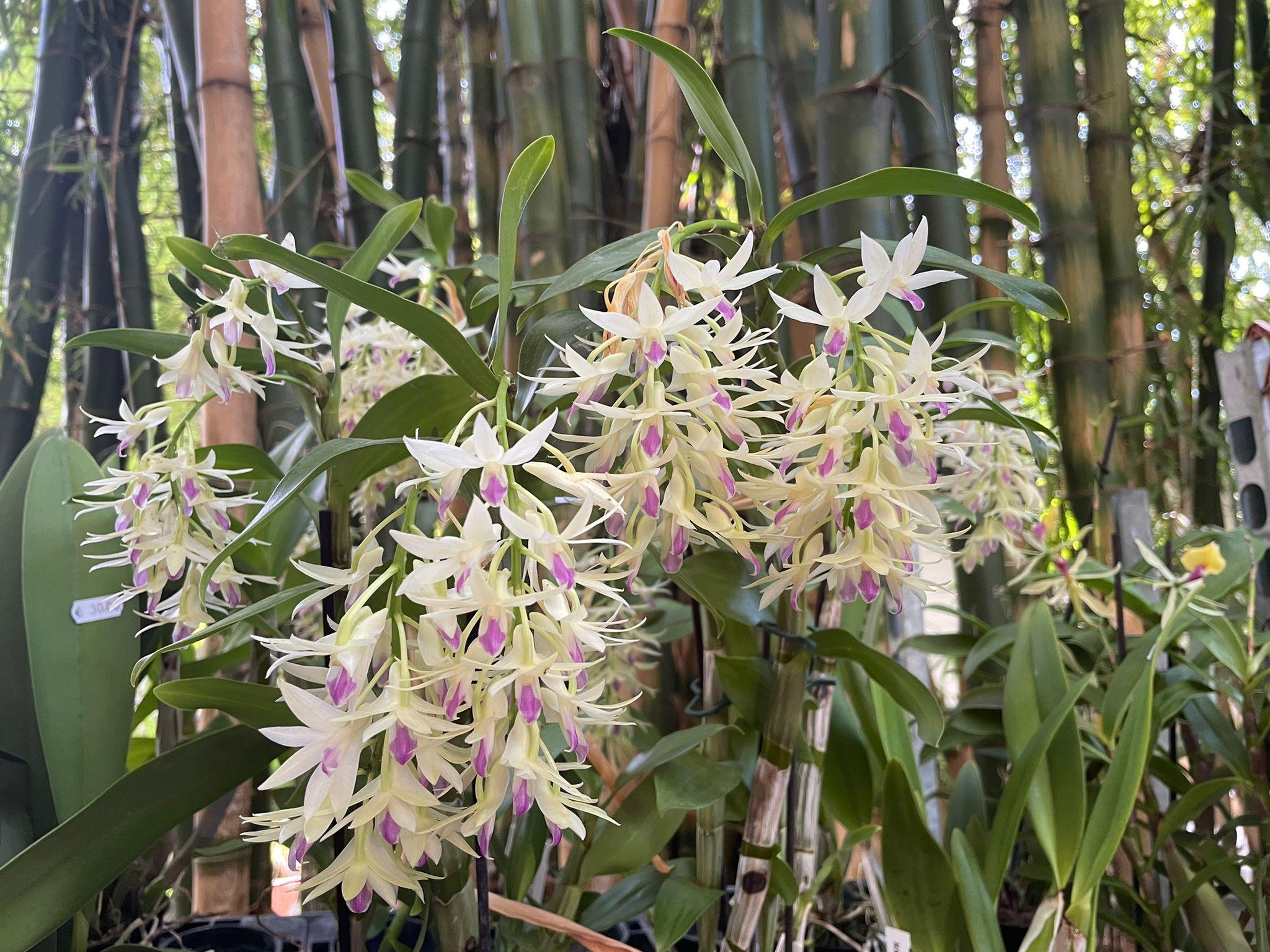 Piante carnivore e orchidee in mostra alla Zagara di primavera